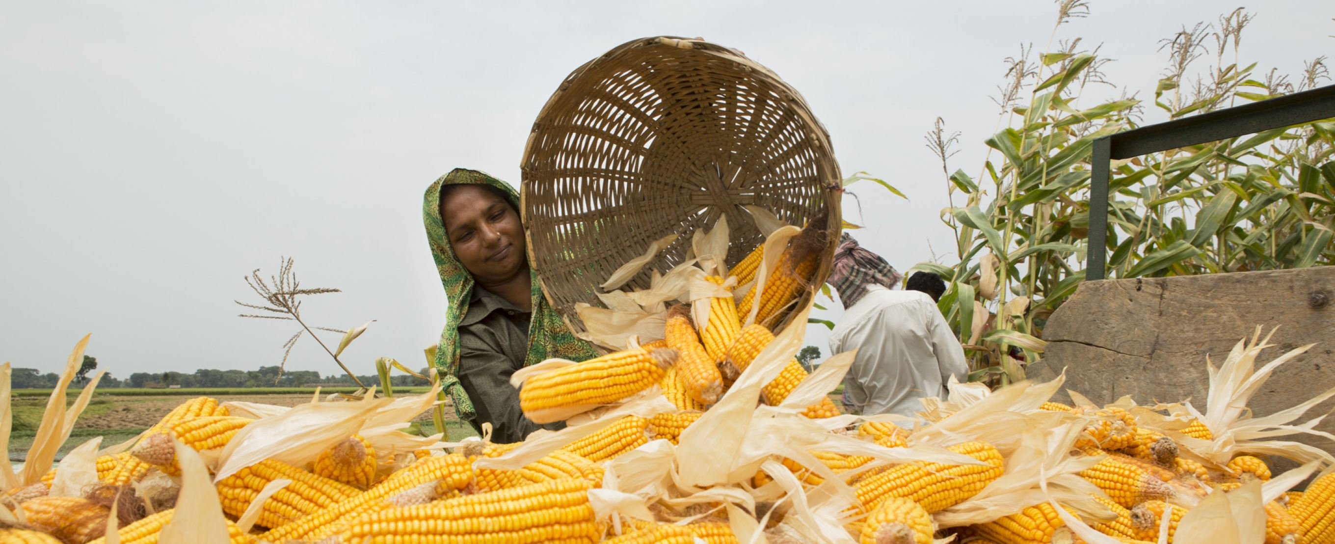 Lady pouring out corn on the cobs