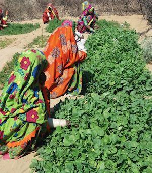 Thar Community Development Fund