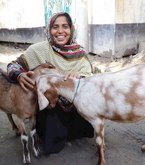 Pair of Milking Goats