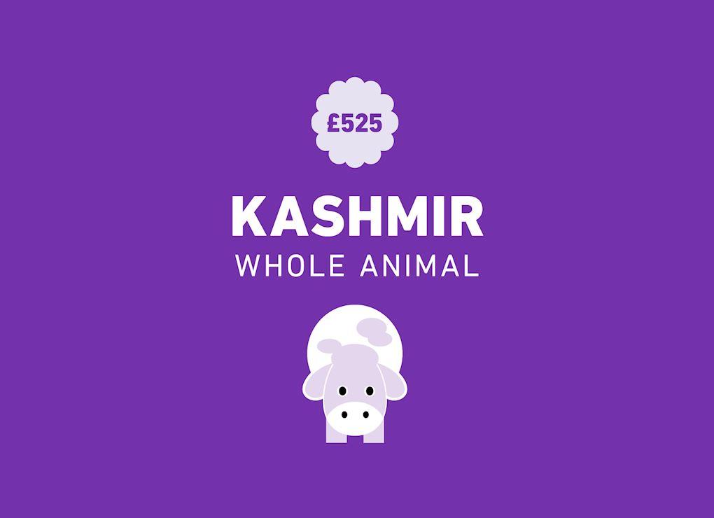 Qurbani - Kashmir (whole animal) | Human Appeal