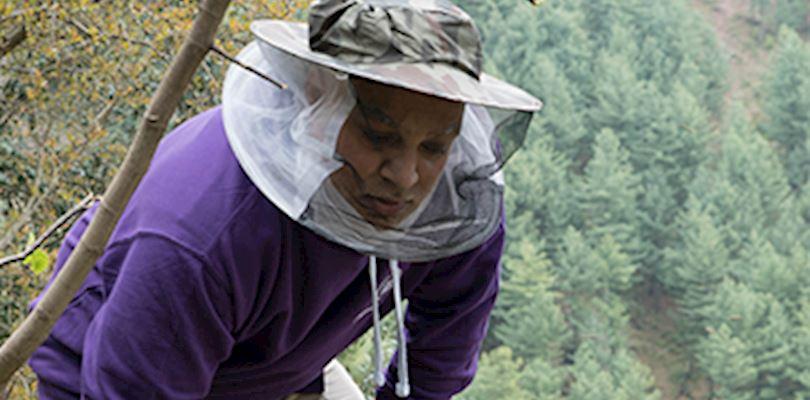 Beekeeping in Pakistan